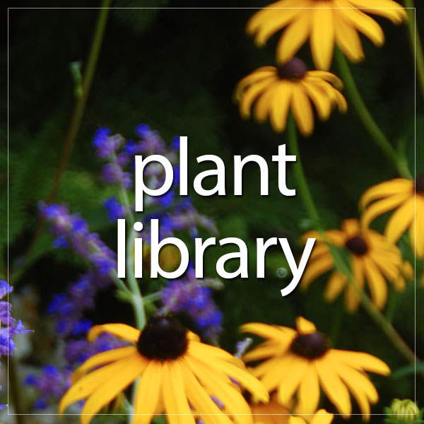 Browse Plant Library