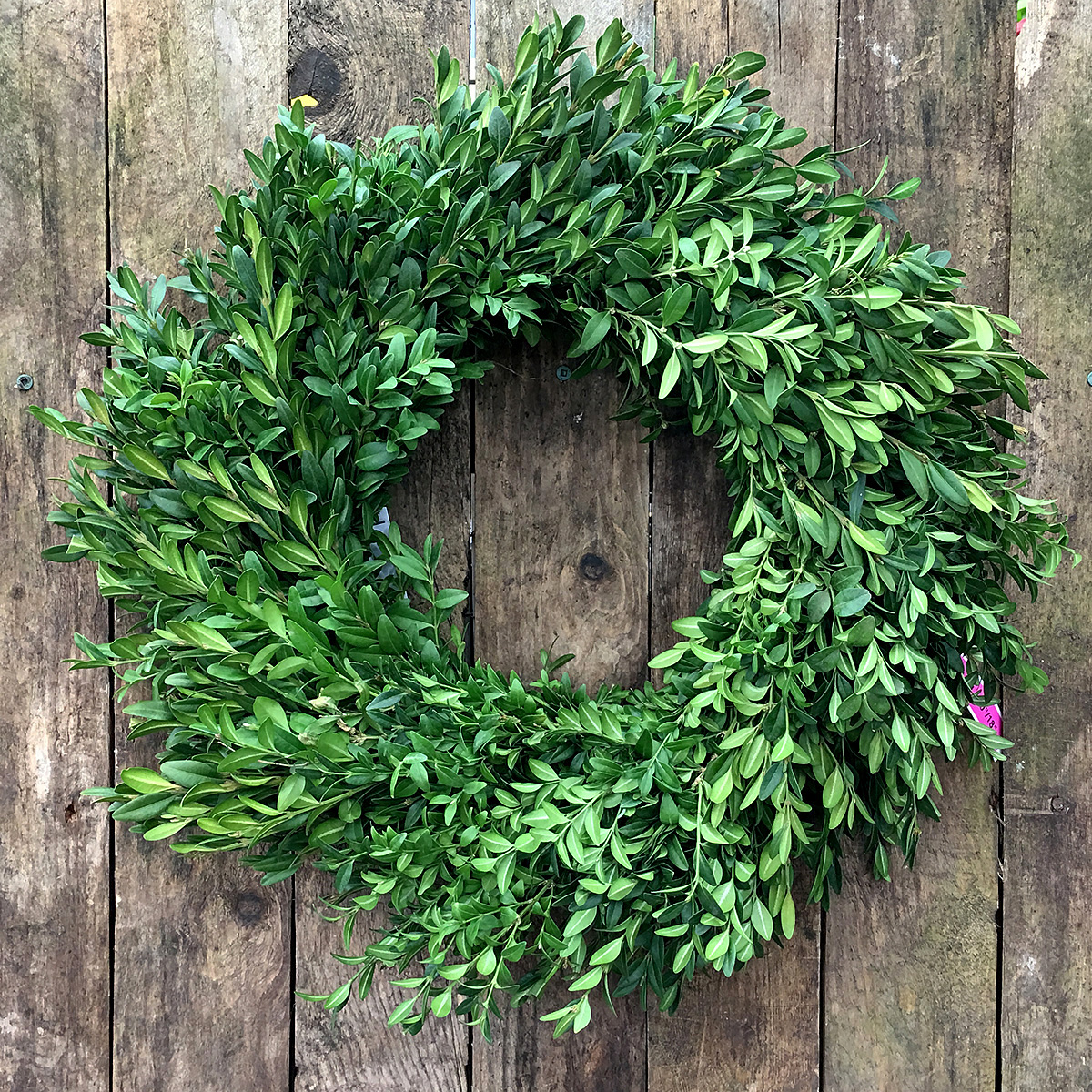 Christmas Wreath Boxwood 18in