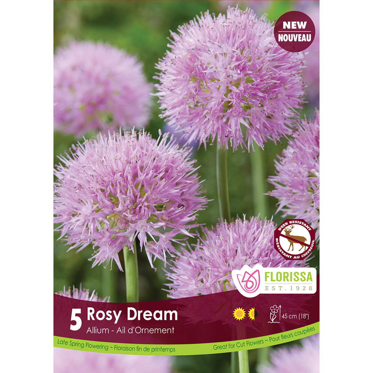 Allium 'Rosy Dream' Bulbs