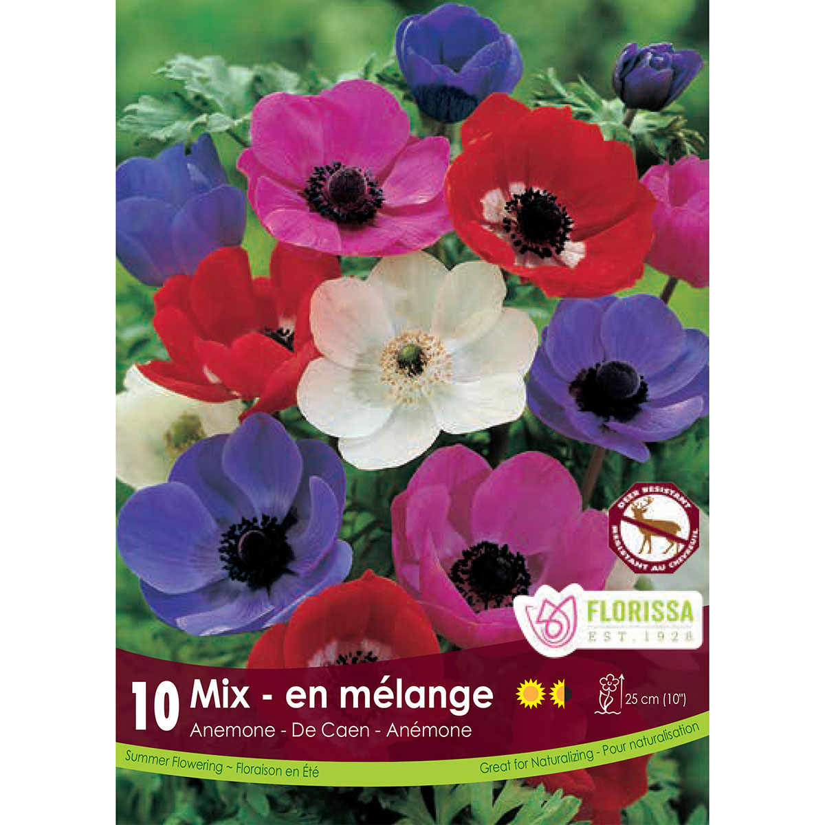 Anemone 'De Caen Mixture' Bulbs