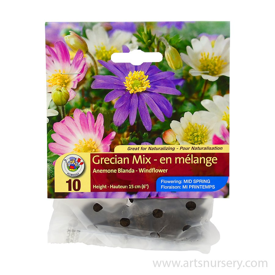 Anemone blanda Grecian Mix Bulbs