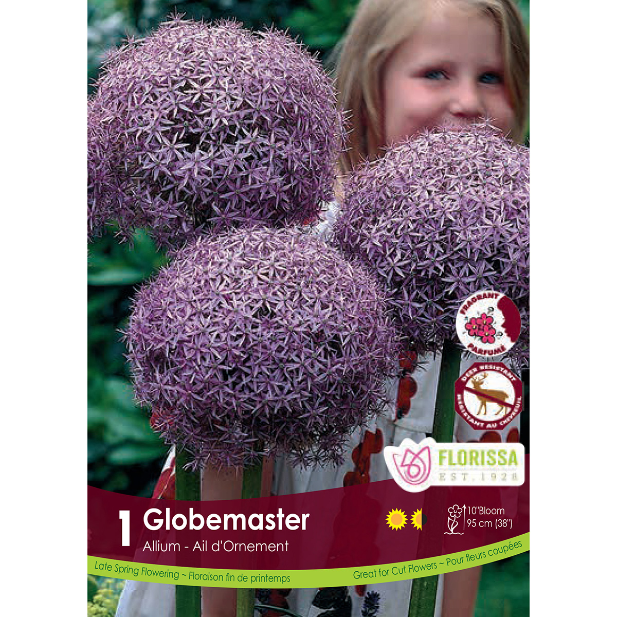 Allium 'Globemaster' Bulbs
