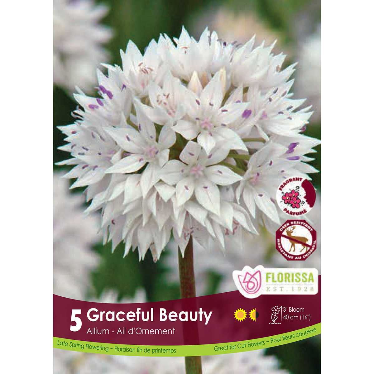Bulb_Allium_Graceful Beauty.jpg