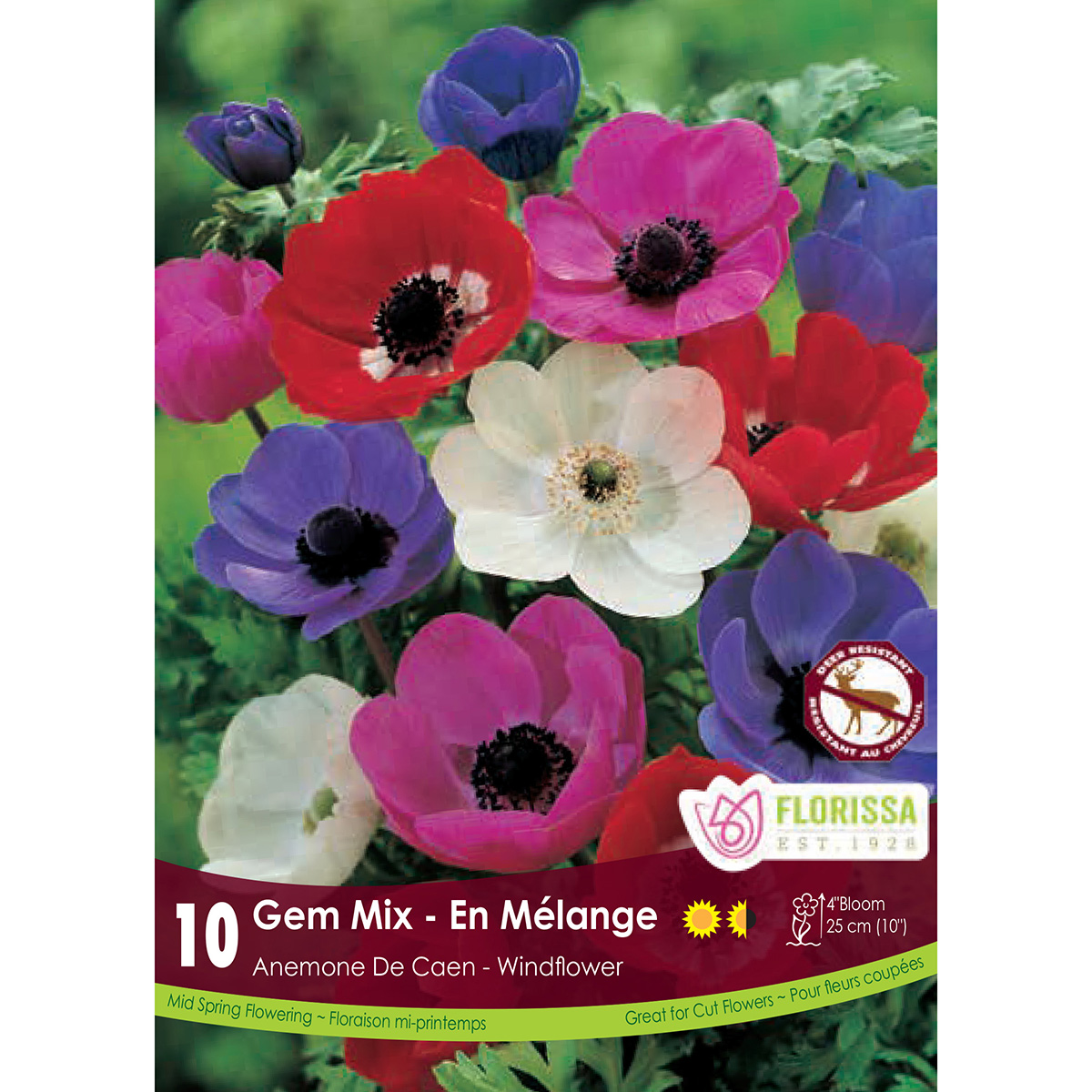 Anemone De Caen 'Gem Mix' Bulbs