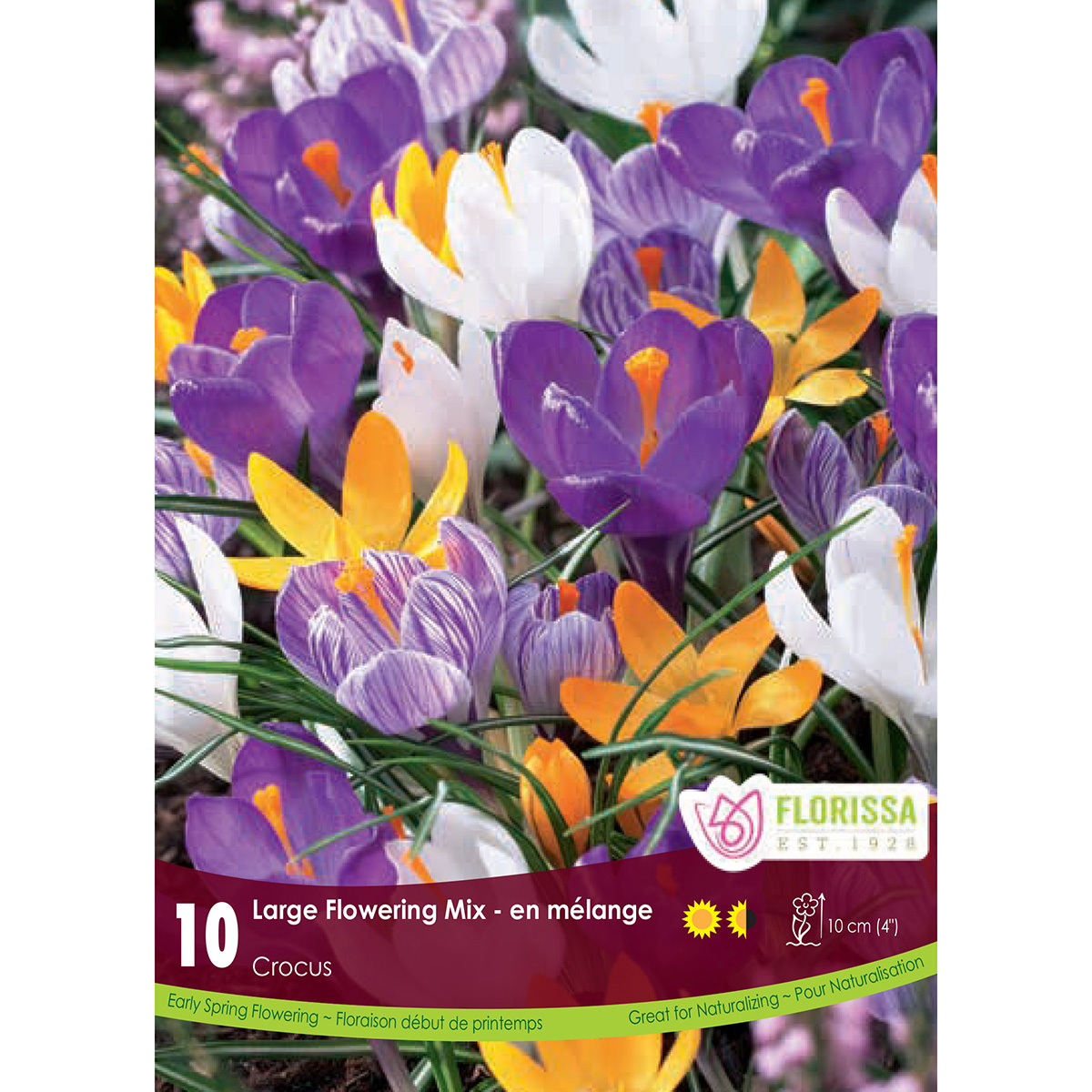 Mammoth Pack Crocus 'Large Flower Mix'