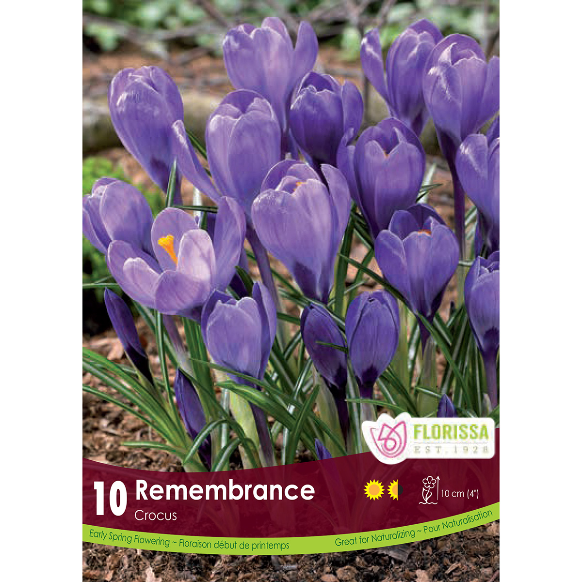 Crocus 'Remembrance' Bulbs