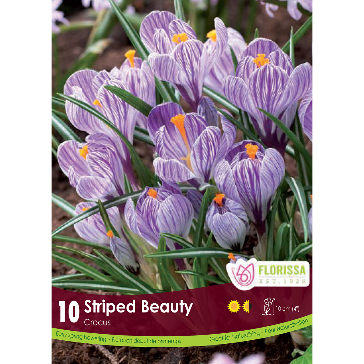 Bulb_Crocus_Striped_Beauty.jpg