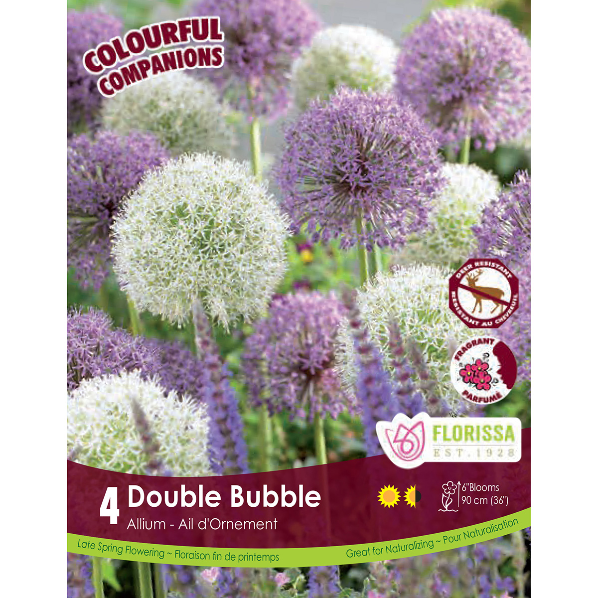 Colourful Companoins 'Double Bubble' Allium Bulbs