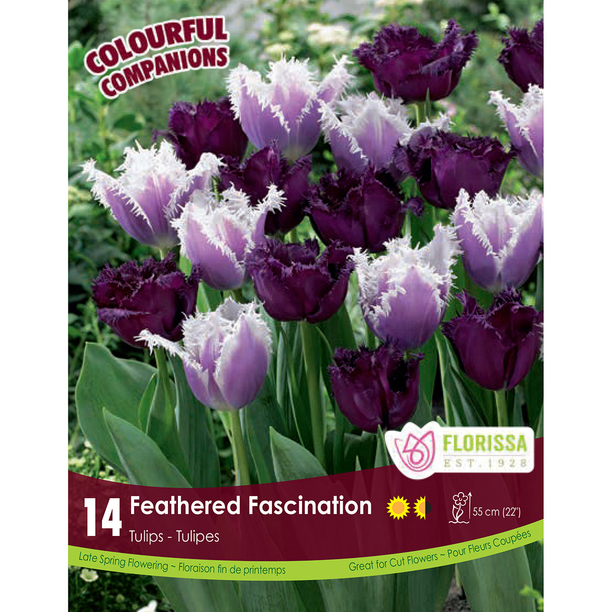 Colourful Companions Tulipa 'Feathered Fascination' Bulbs