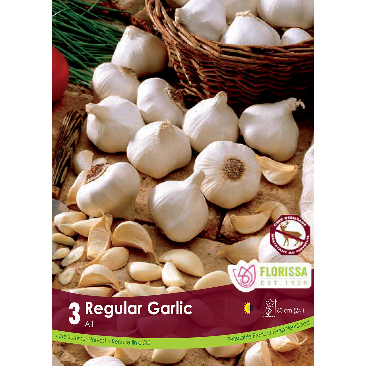 Garlic 'Regular' Bulbs