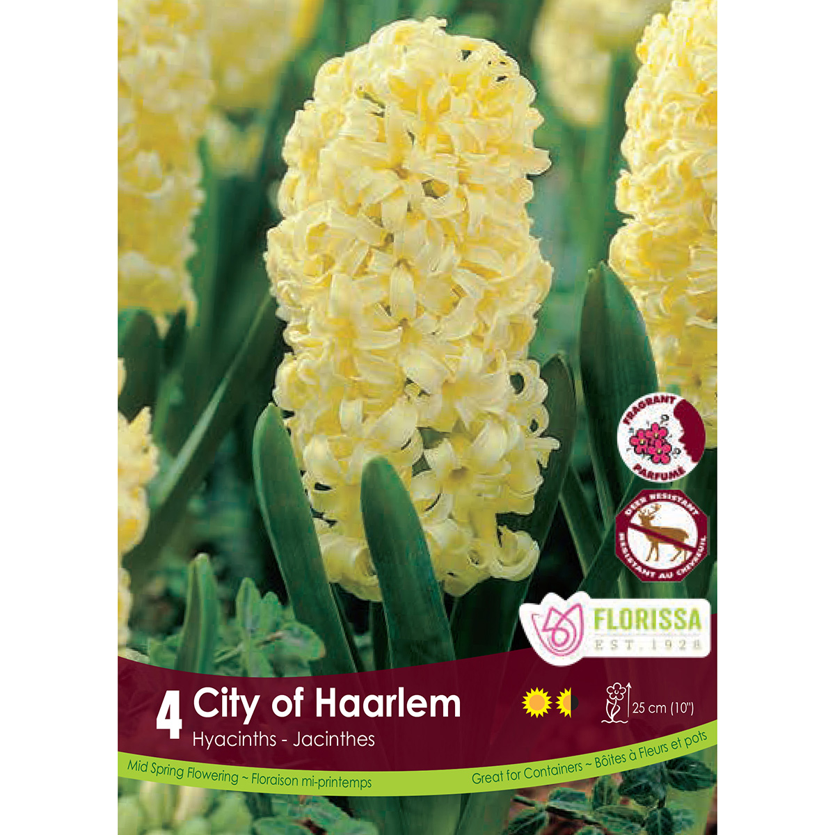 Hyacinth 'City of Haarlem' Bulbs