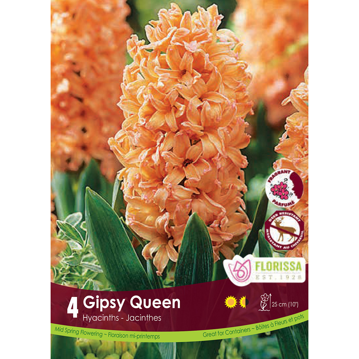 Hyacinth 'Gipsy Queen' Bulbs