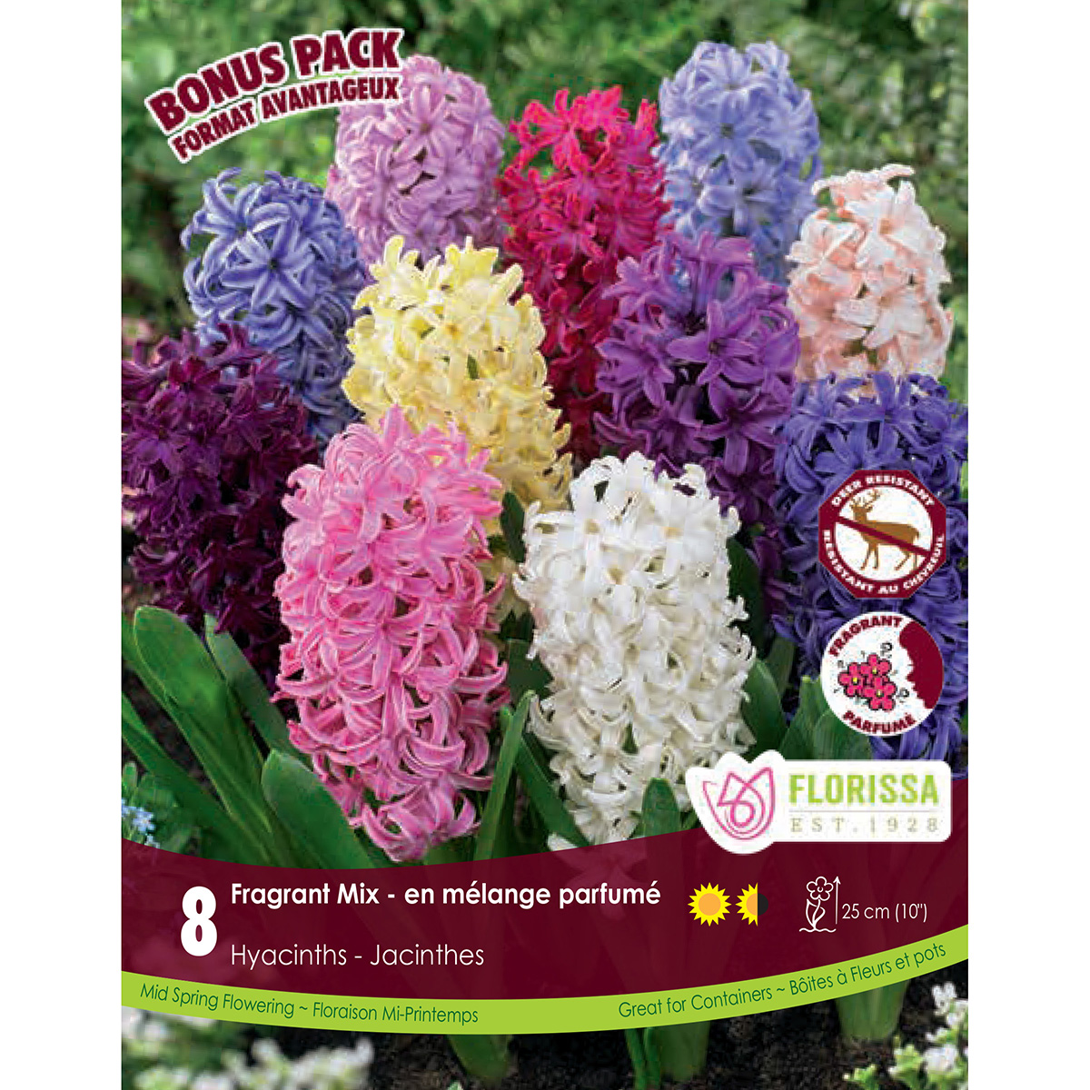 Mammoth Pack Hyacinth 'Fragrant Mix'