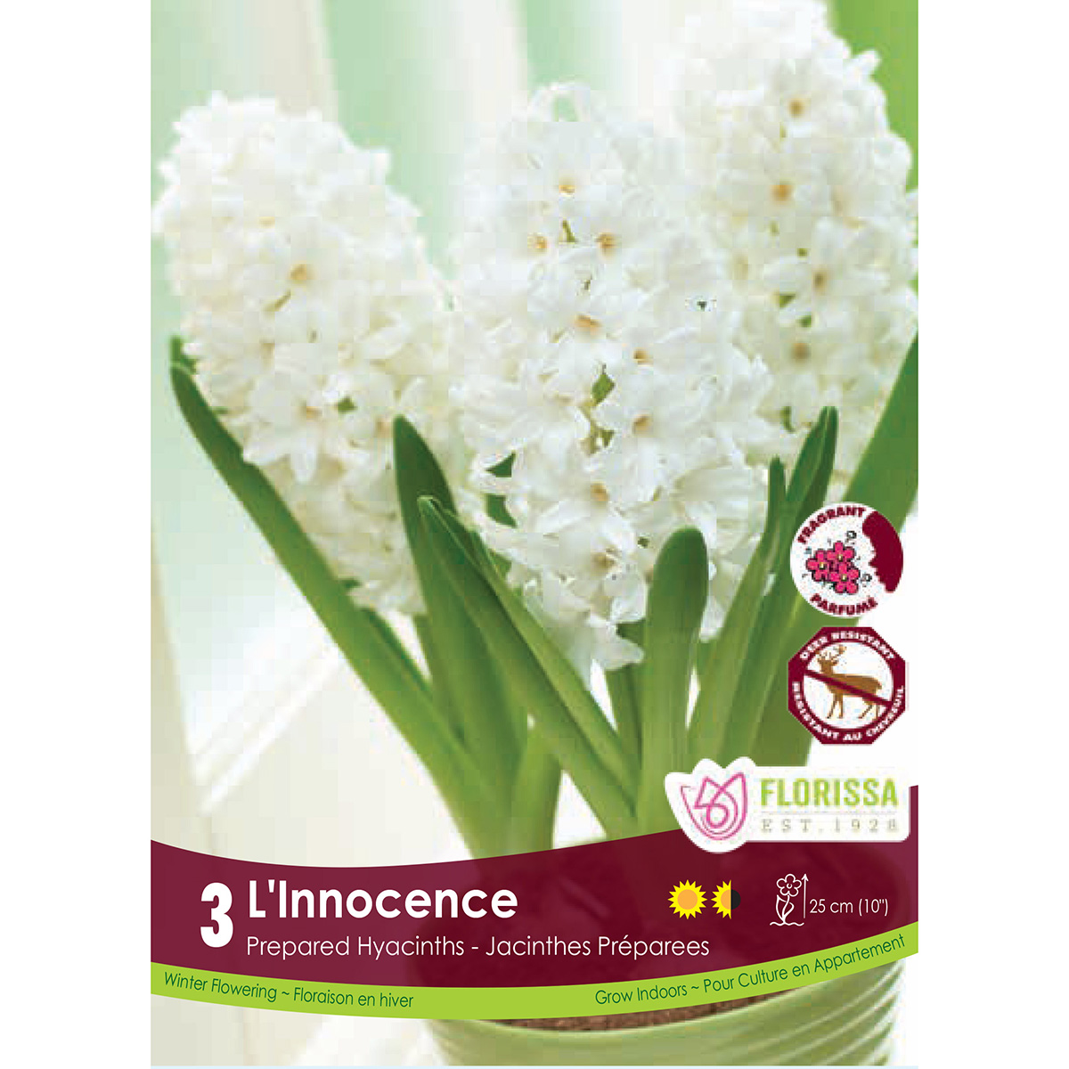 Prepared Hyacinth 'L'Innocence' Bulbs