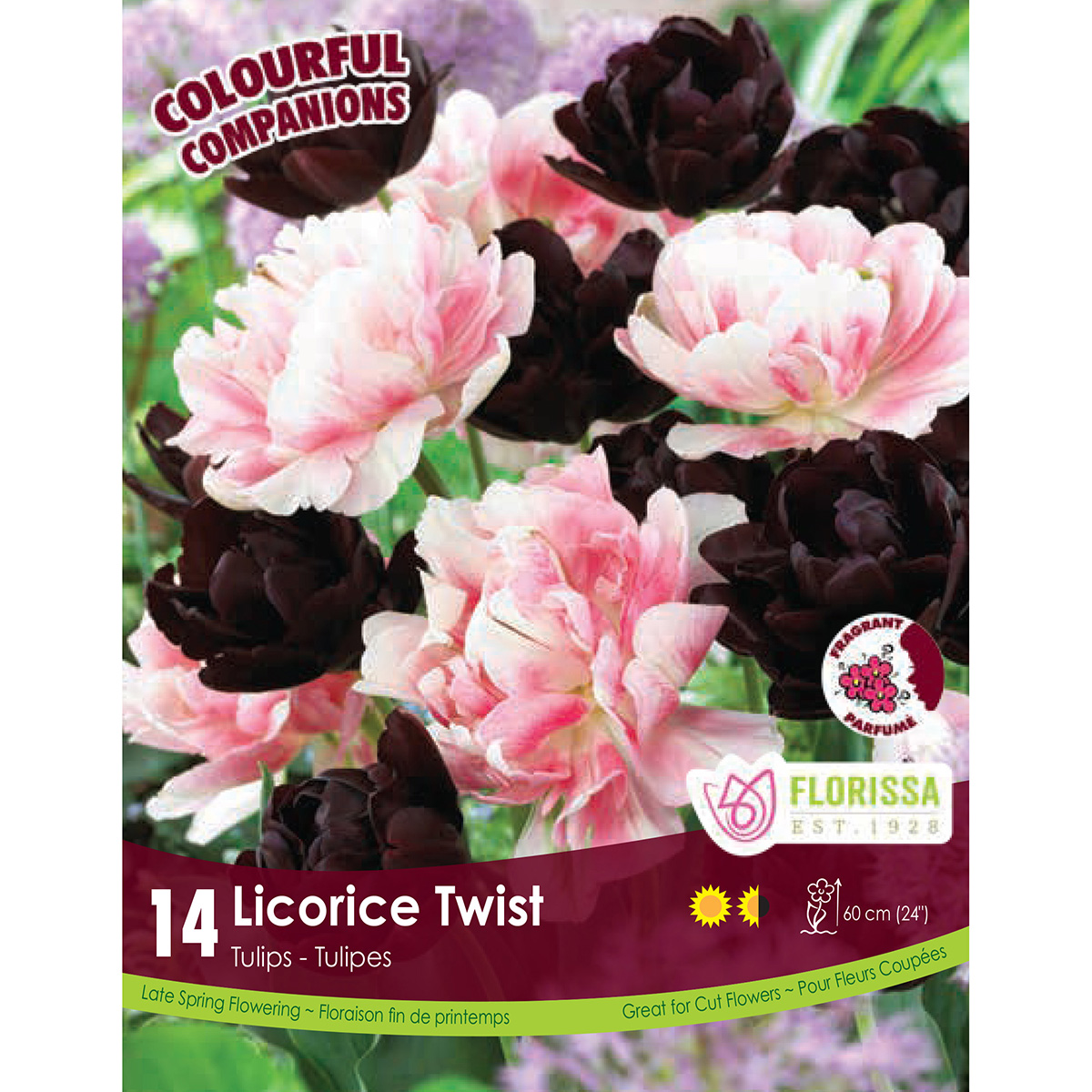 Colourful Companions 'Licorice Twist' Bulbs