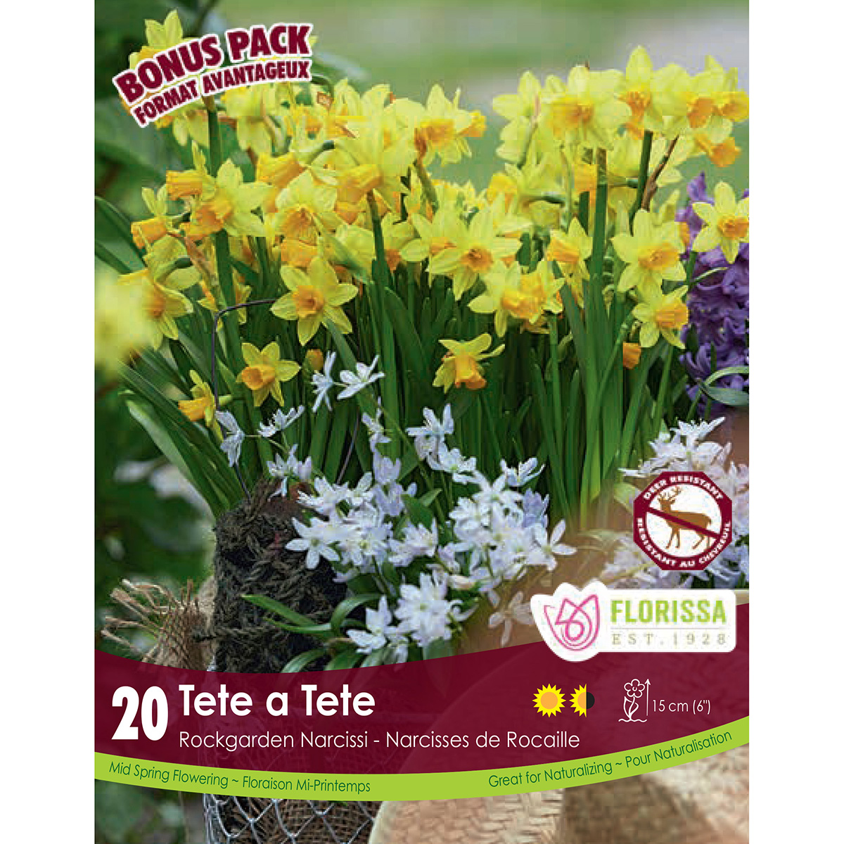 Narcissus 'Tete a Tete' Bulbs