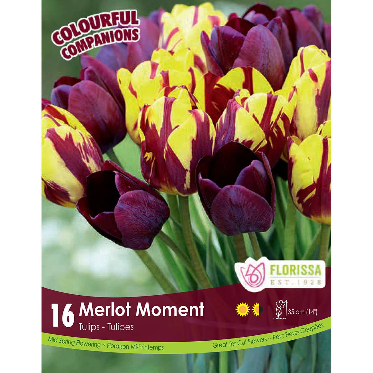 Colourful Companions Tulipa 'Merlot Moment' Bulbs