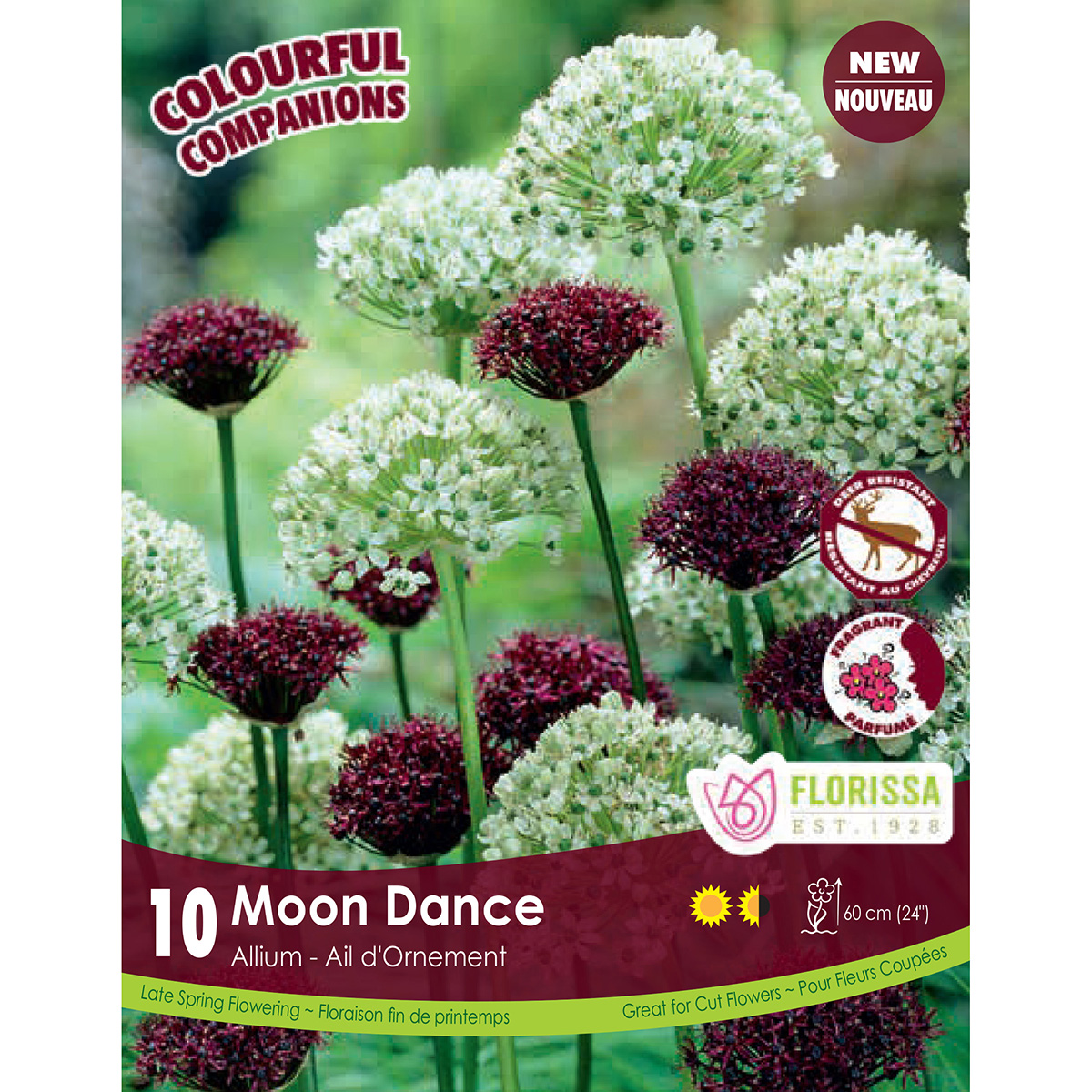 Colourful Companions Alium 'Moon Dance' Bulbs