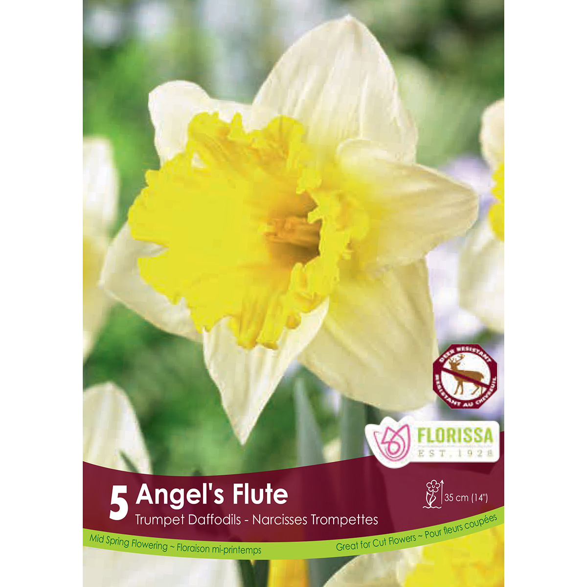 Narcissus 'Angels Flute'