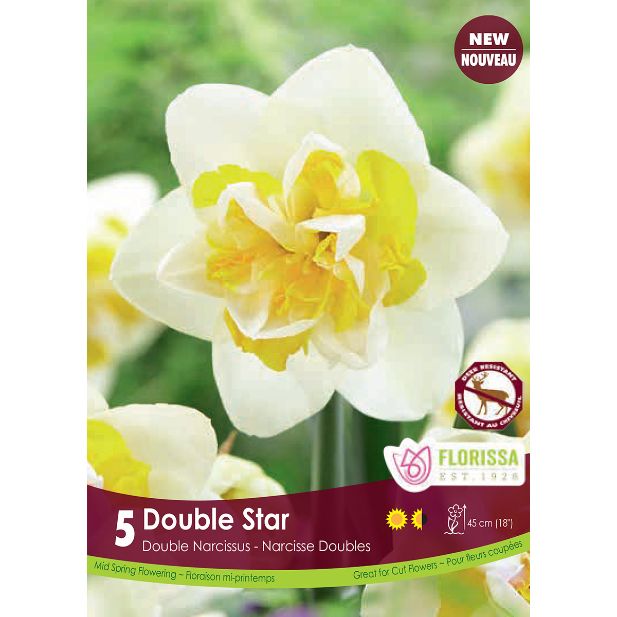 Narcissus 'Double Star' Bulbs