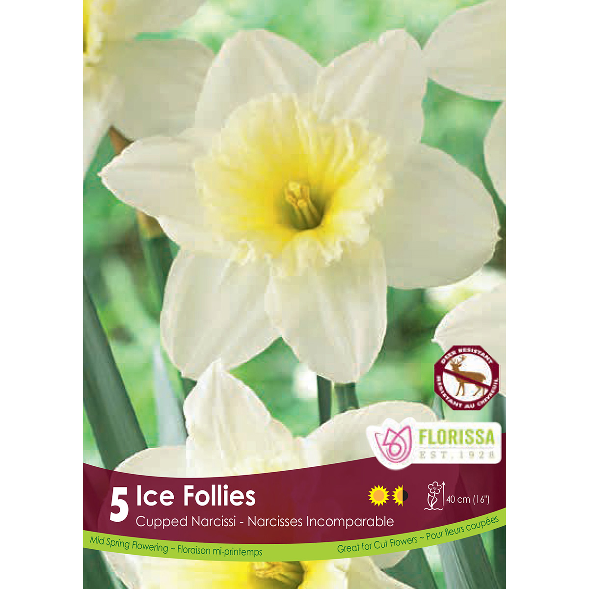 Narcissus 'Ice Follies' Bulbs