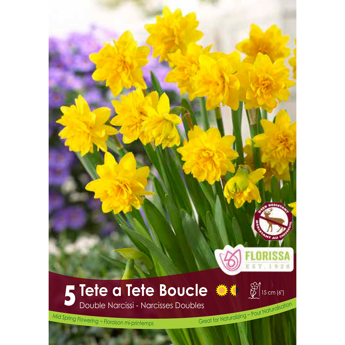 Bulb_Narcissus_Tete_Boucle.jpg