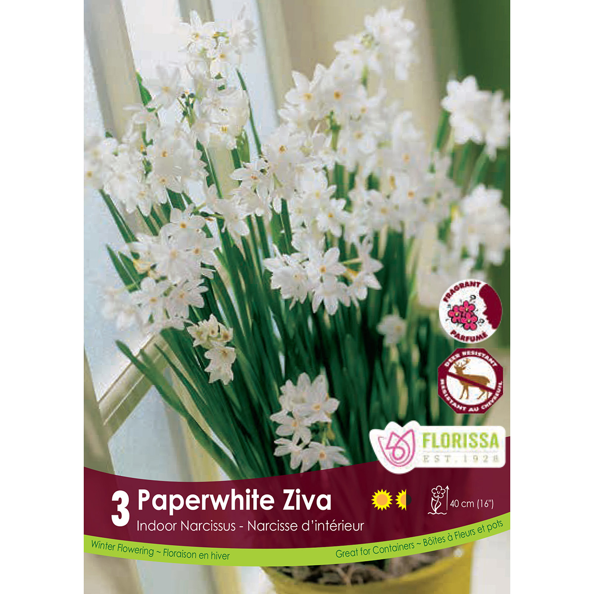 Narcissus 'Paperwhite Ziva Indoor' Bulbs