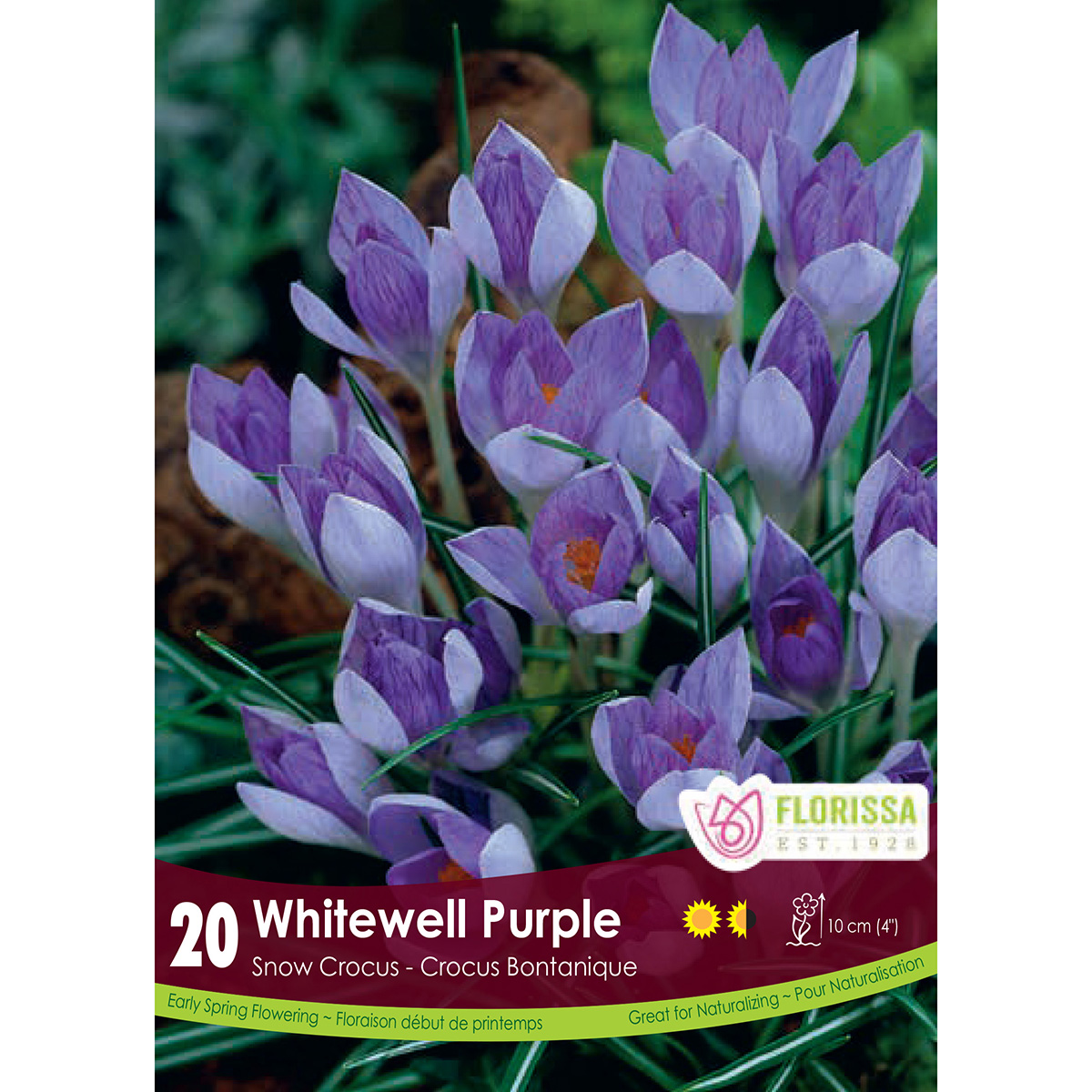 Crocus 'Whitewell Purple' Bulbs