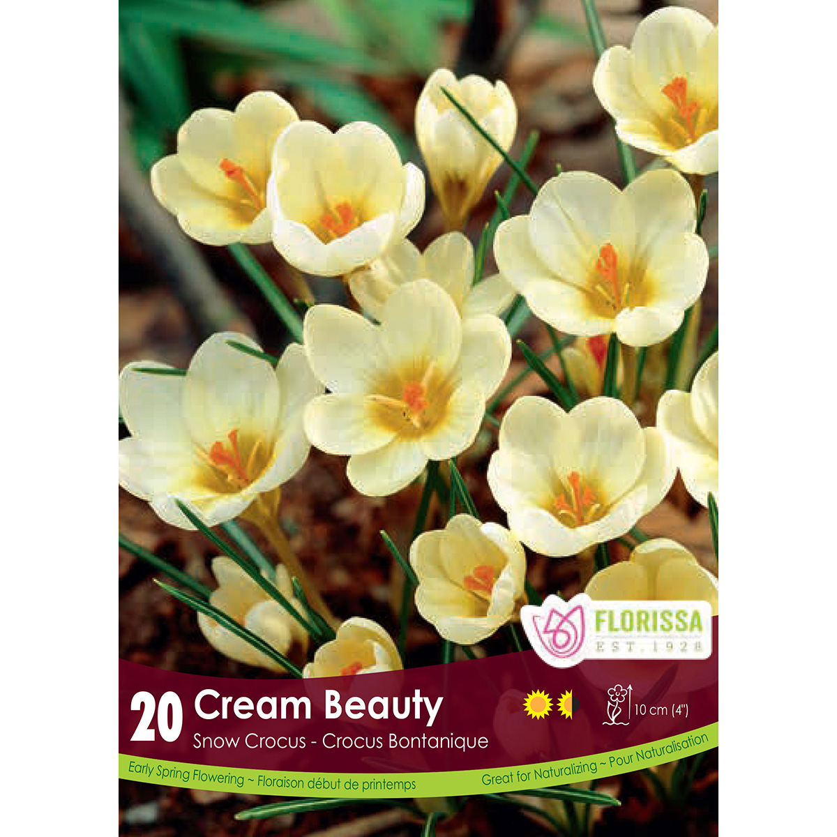 Crocus 'Cream Beauty' Bulbs
