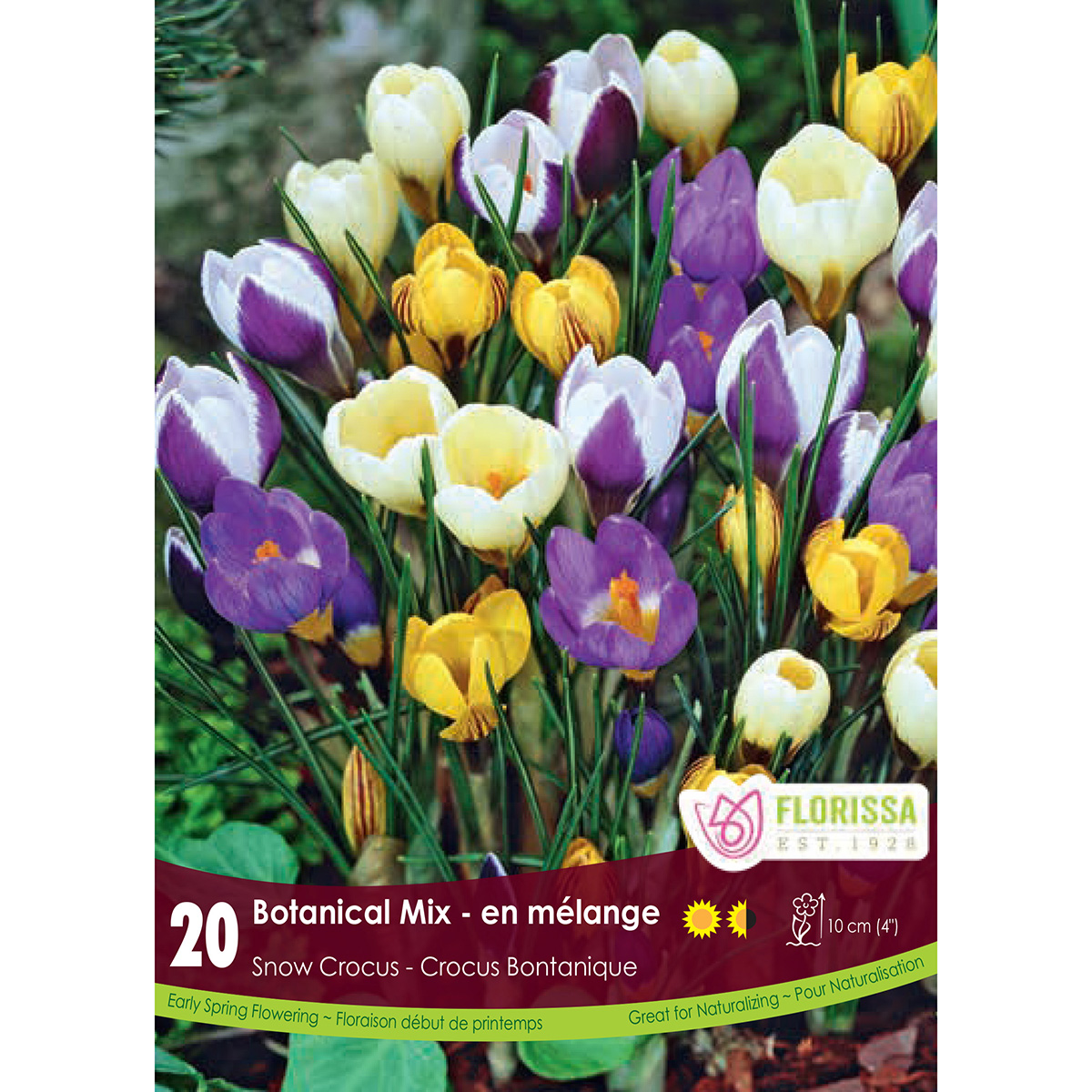 Crocus 'Botanical Mix' Bulbs