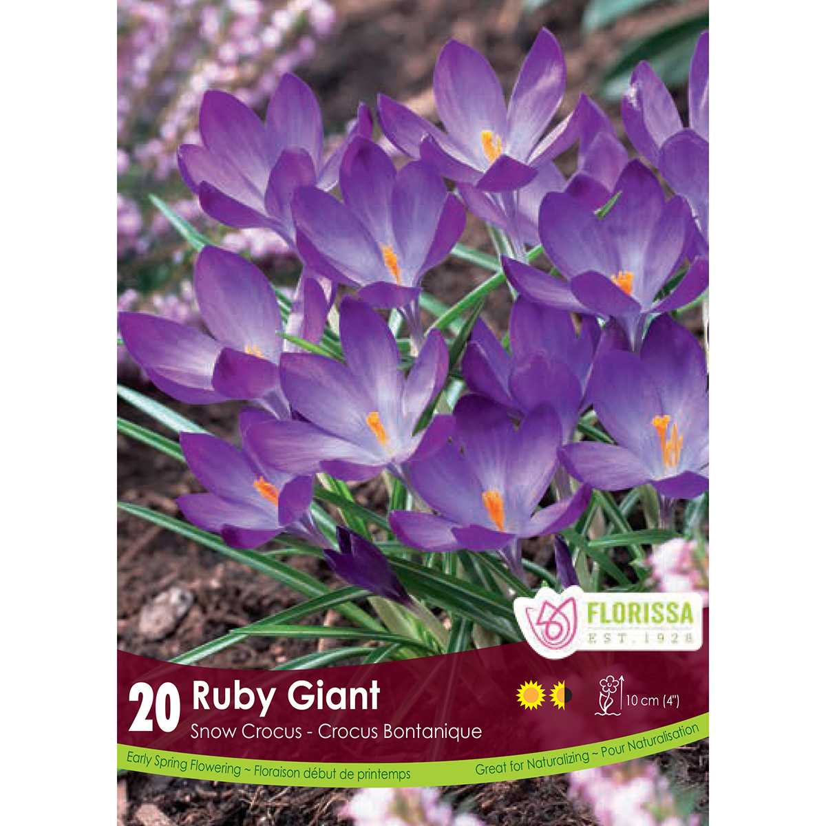 Crocus 'Ruby Giant' Bulbs