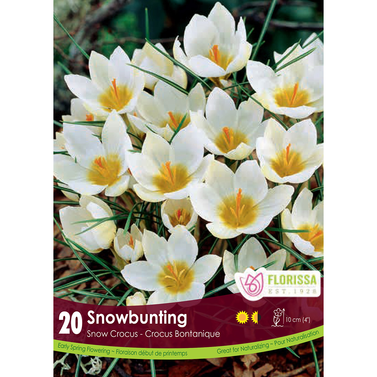 Crocus 'Snowbunting' Bulbs