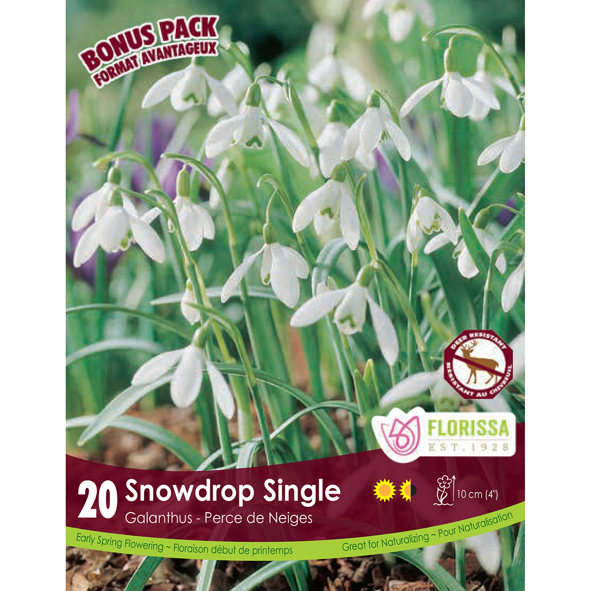 Galanthus 'Snowdrop Single' Bulbs