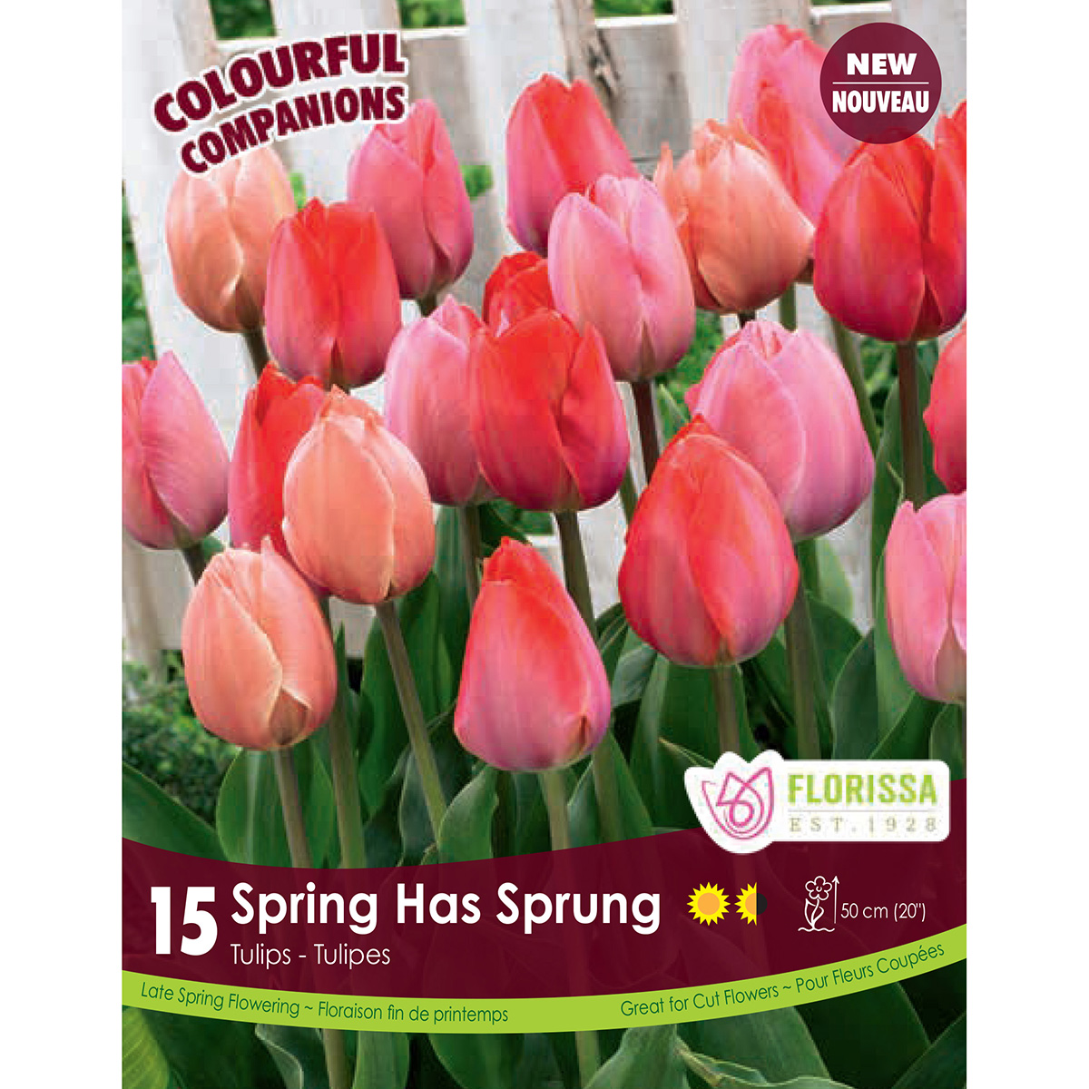 Colourful Companions Tulipa 'Spring Has Sprung' Bulbs