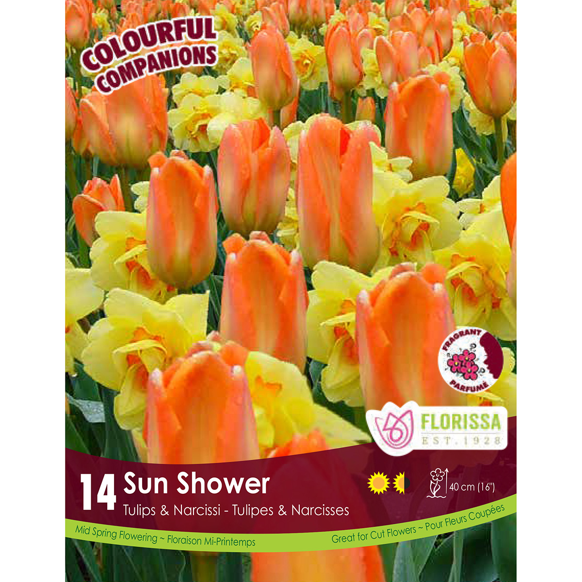 Colourful Companions 'Sun Shower' Bulbs