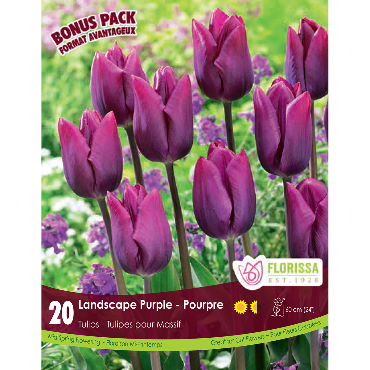 Tulipa 'Landscape Purple' Bulbs