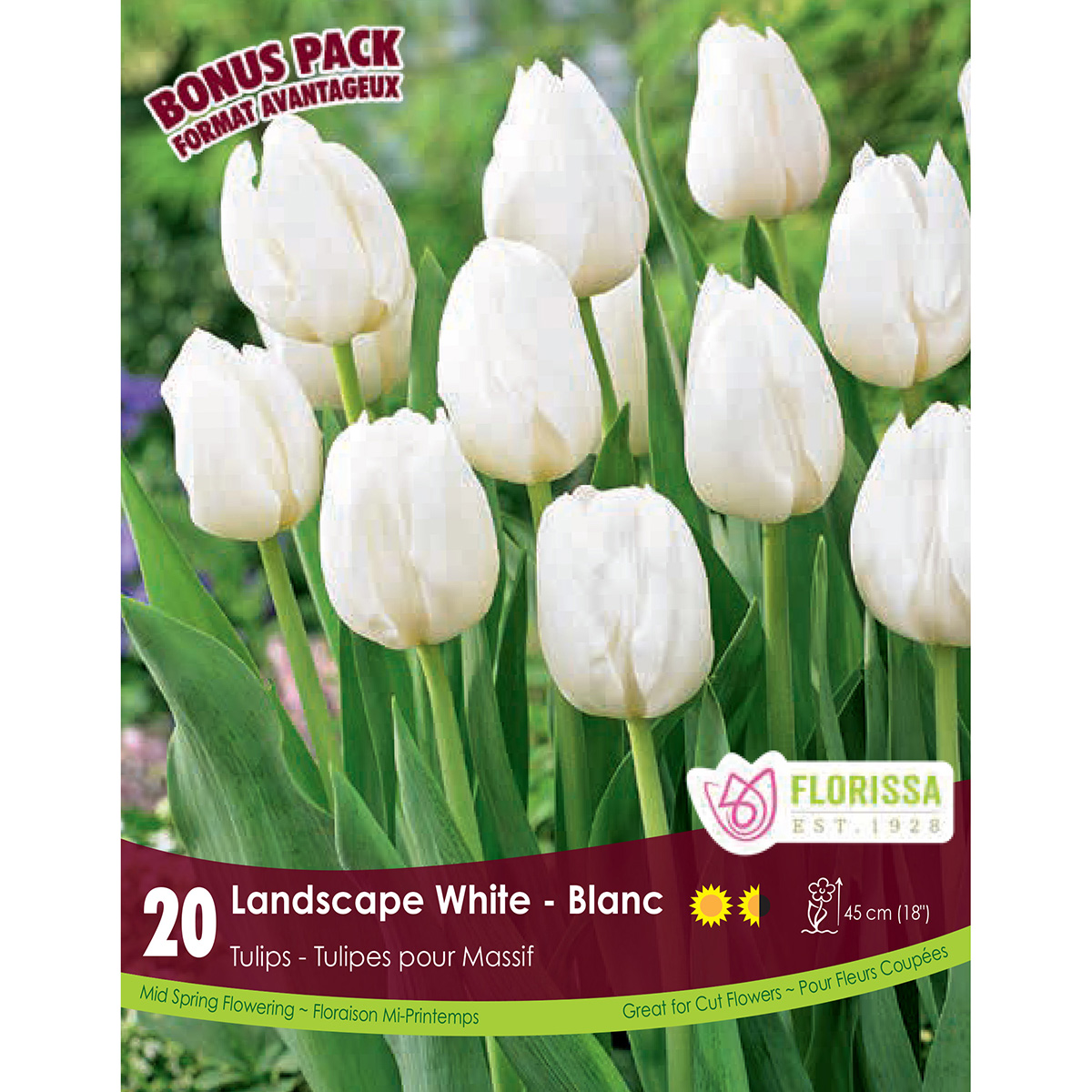 Tulipa 'Landscape White' Bulbs