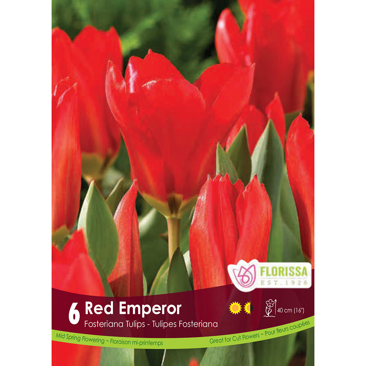 Tulipa 'Red Emperor' Bulbs