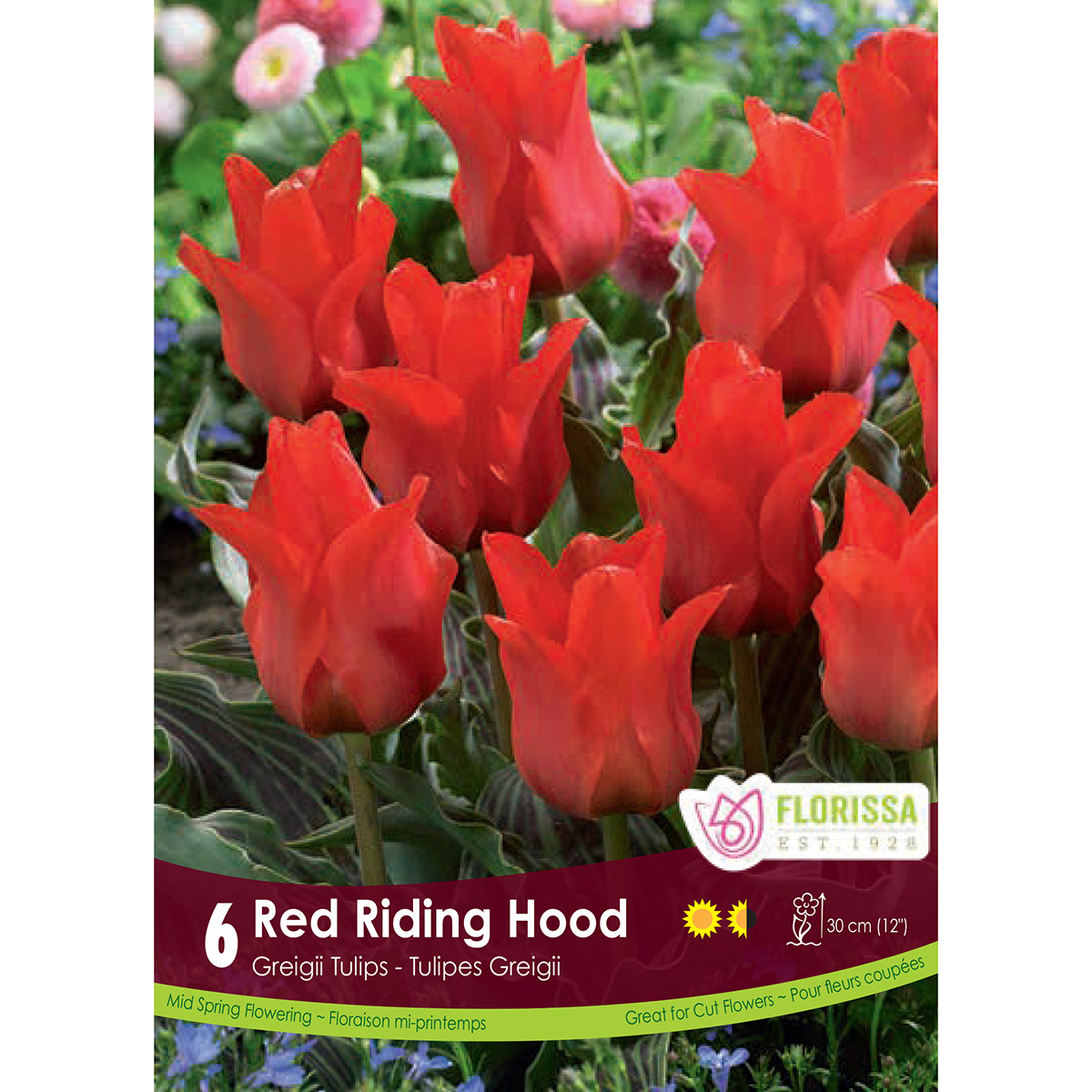 Bulb_tulip_Red_Ridinghood.jpg