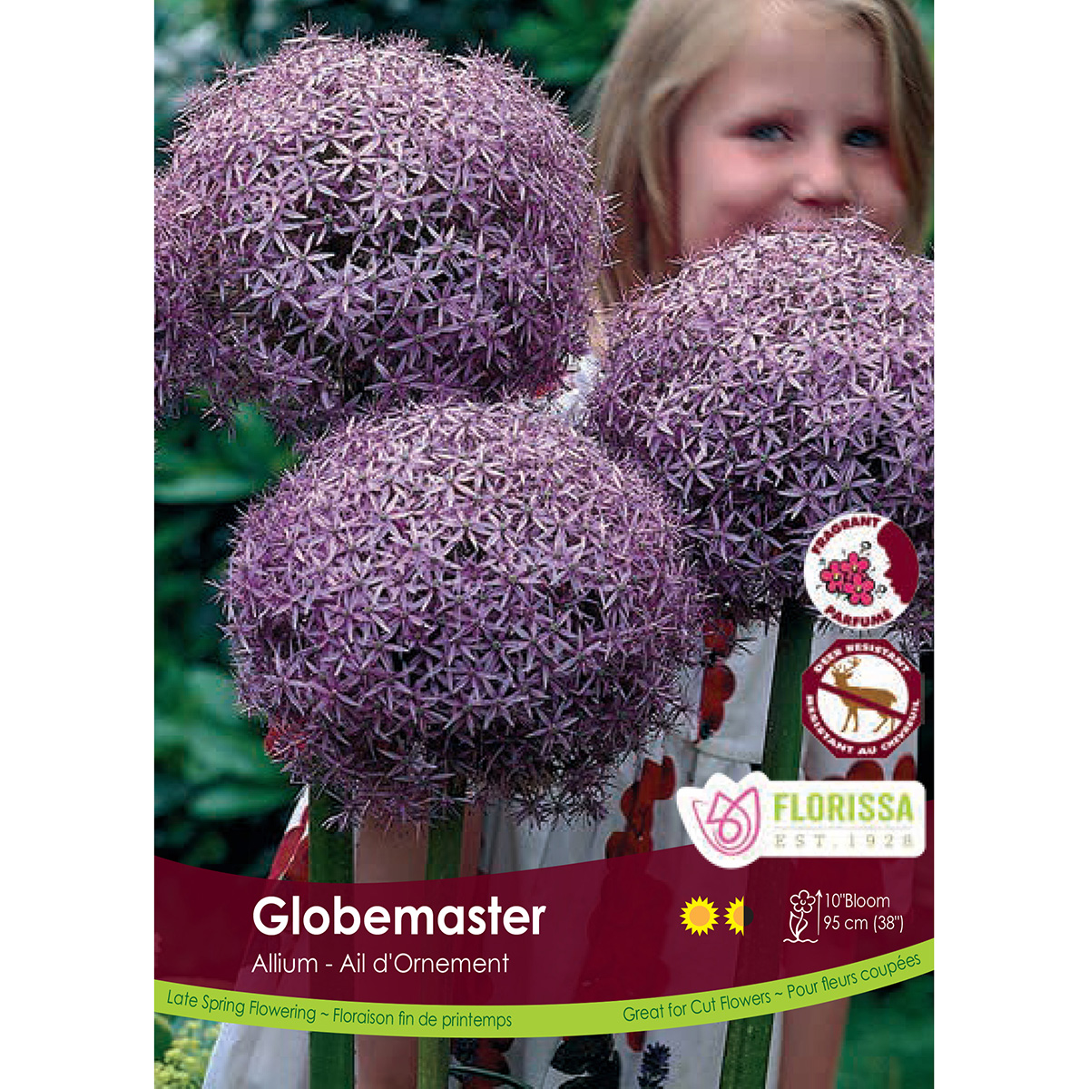 Allium 'Globemaster' Bulk Bulbs