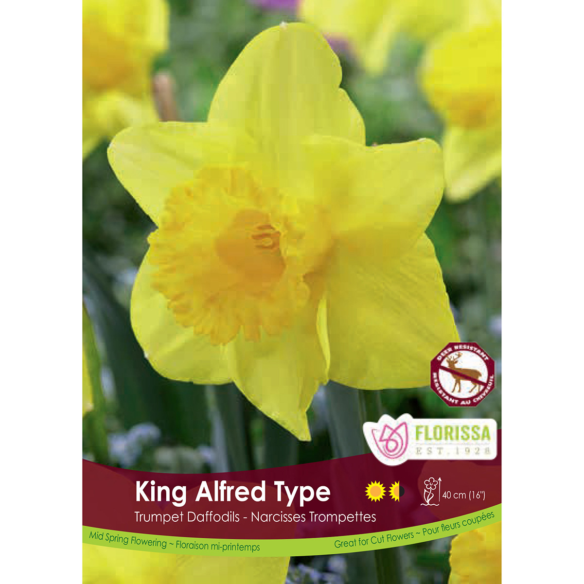 Narcissus 'King Alfred Type Trumpet' Bulk Bulbs