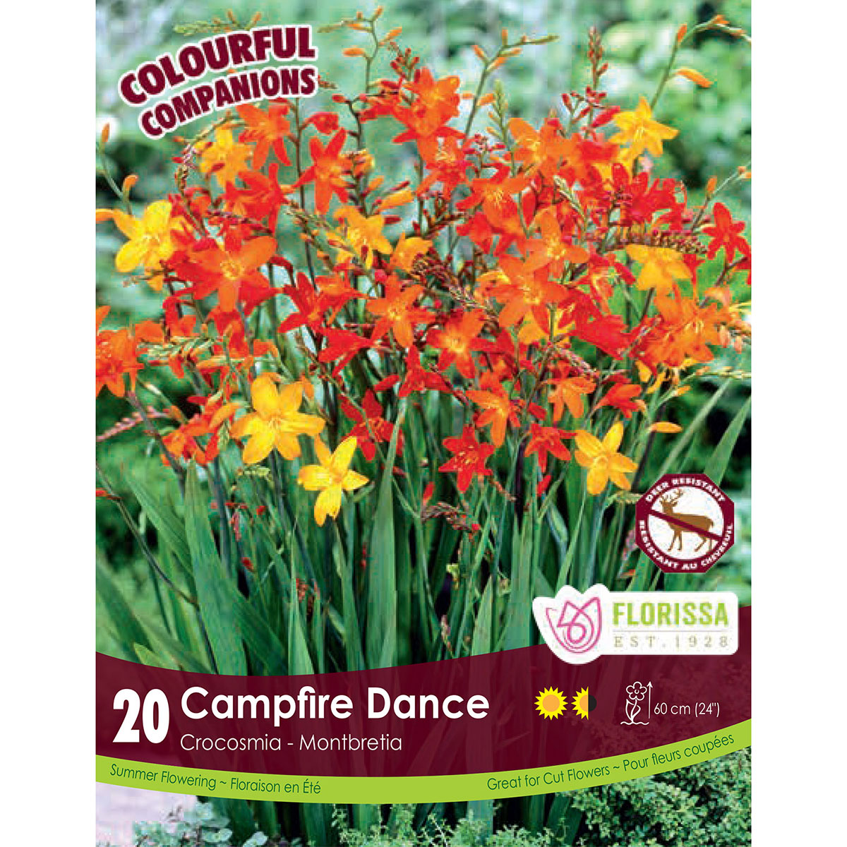 Crocosmia 'Campfire Dance' Bulbs