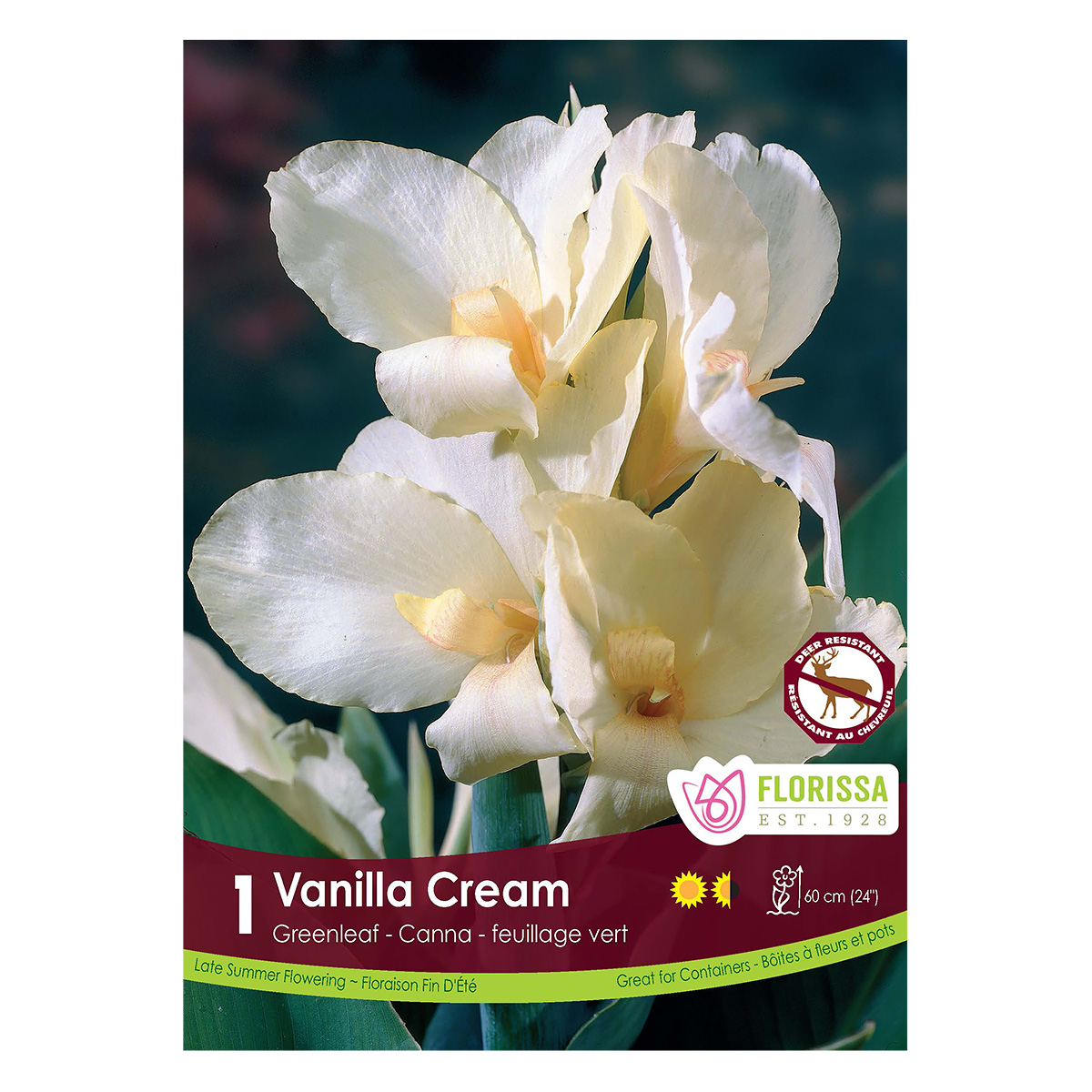 Canna Vanilla Cream Root