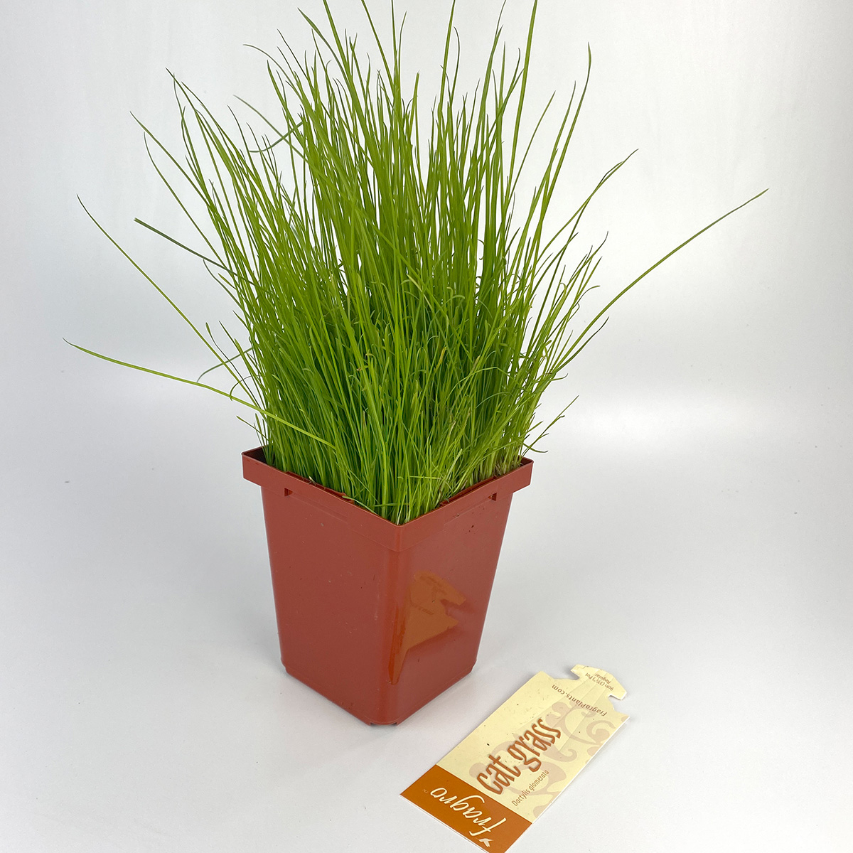 Catgrass_4in.jpg