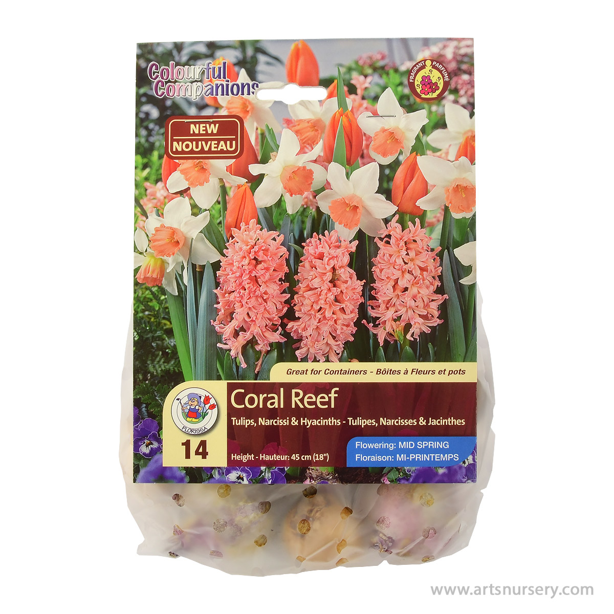 Colourful Companions Tulipa 'Coral Reef' Bulbs