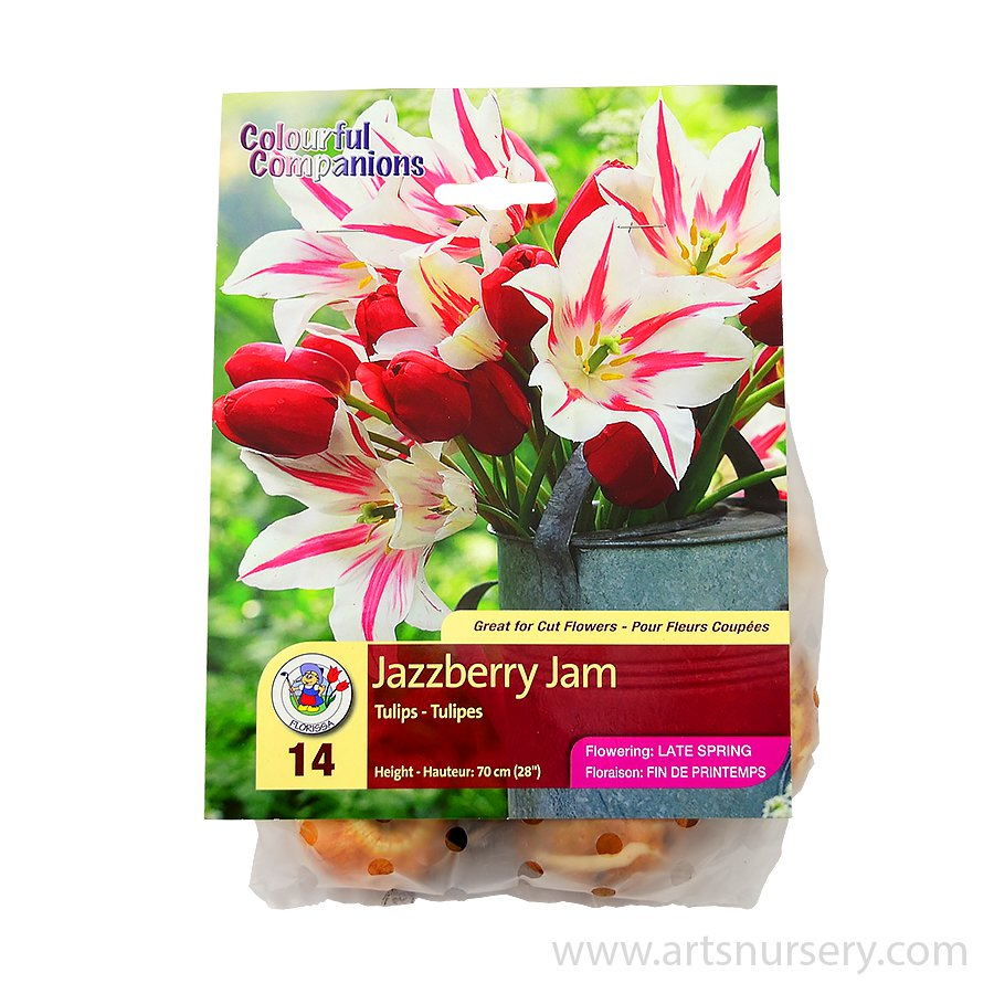 Colourful Companions 'Jazzberry Jam' Bulbs