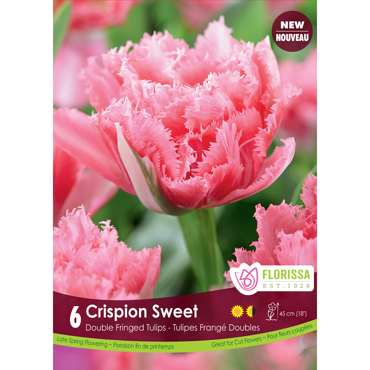 Tulipa 'Crispion Sweet' Bulbs