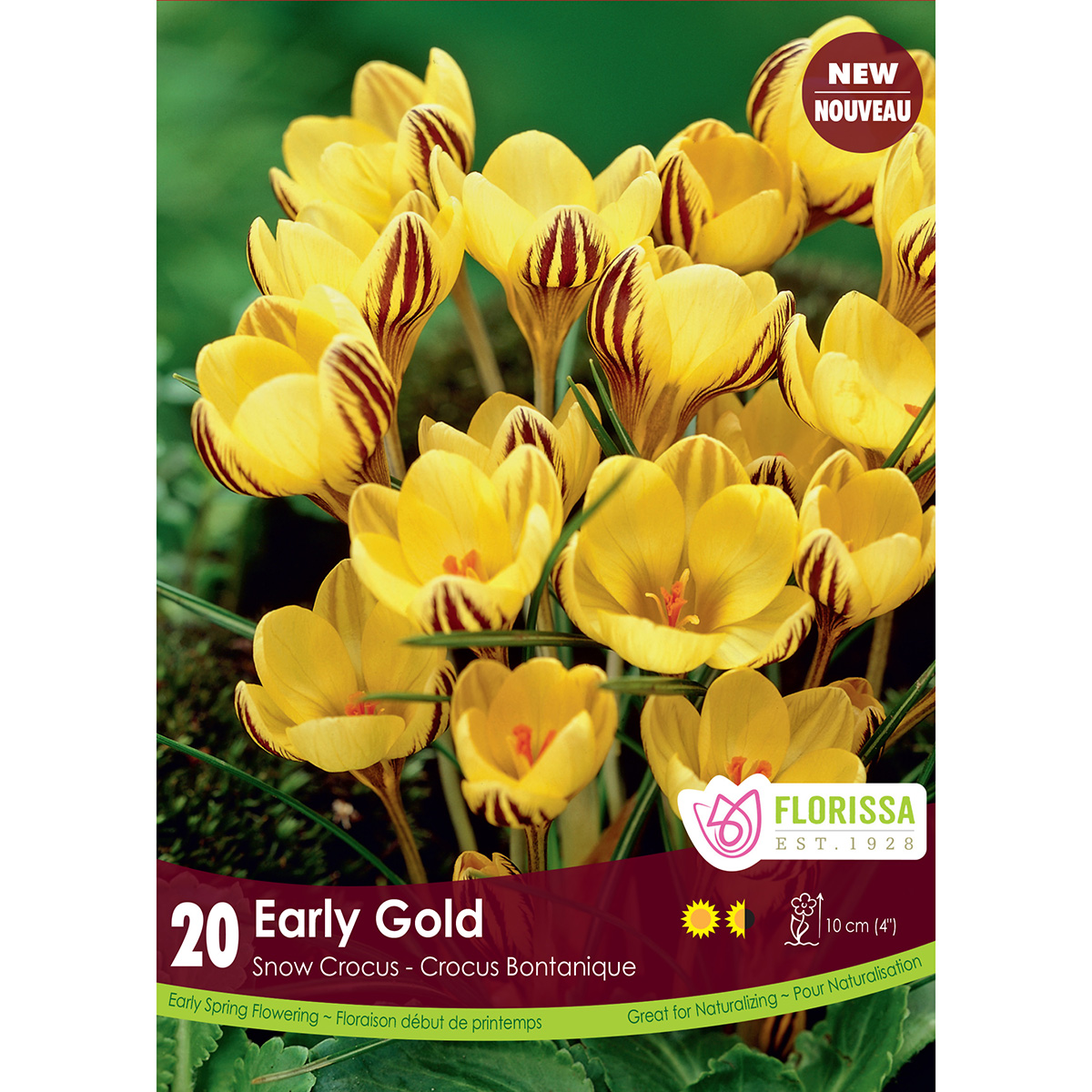 Crocus 'Early Gold' Bulbs