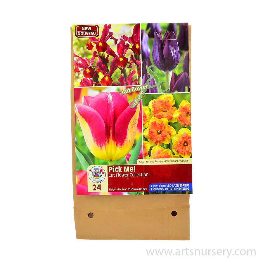 Pick Me Raspberry Flower Bulb Collection