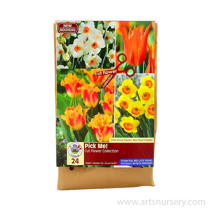 Pick Me Tangerine Flower Bulb Collection